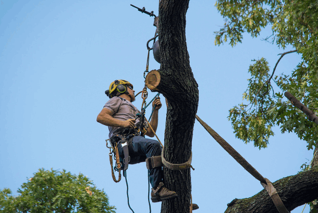 Canberra Tree Lopping