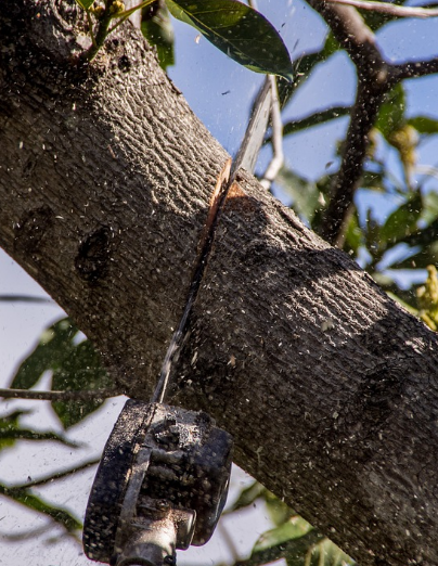 Tree Service Canberra